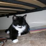 Einstein taking refuge under the futon.