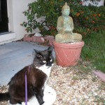 Boomerang with his purple leash communes with the Buddha before beginning his walk.