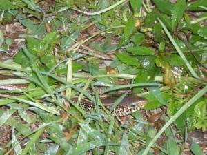 mister-snake