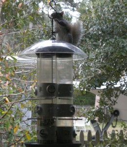squirrel-on-top