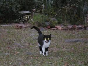 cat-aa4