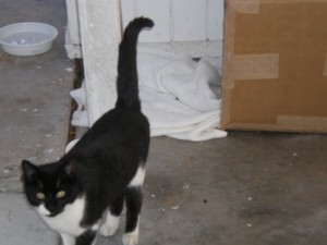 Here he is in front of his carport box and blanket home ...  but he wants a REAL home!!