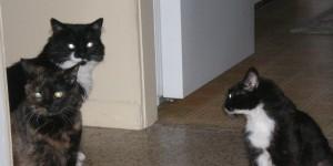 cat-convention