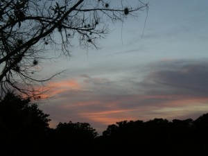 The view from my yard, late in the evening; not yet night.