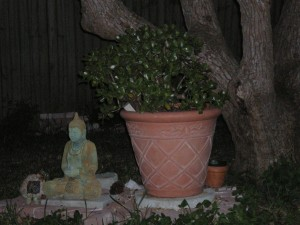 The quiet place in my yard where lizards lounge on the Buddha and the jade plant seems to know all.