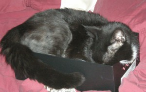 Einstein squeezed herself into this empty shoebox on my bed ... she's adorable!