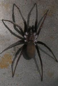 spider-in-carport