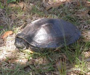 An unusual sighting in the Coolidge backyard.
