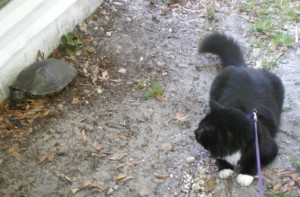 A close encounter between feline and reptilian intruder.